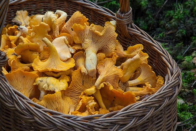 Обратите внимание на грибы.