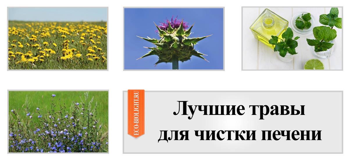 Лучшие травы для чистки печени